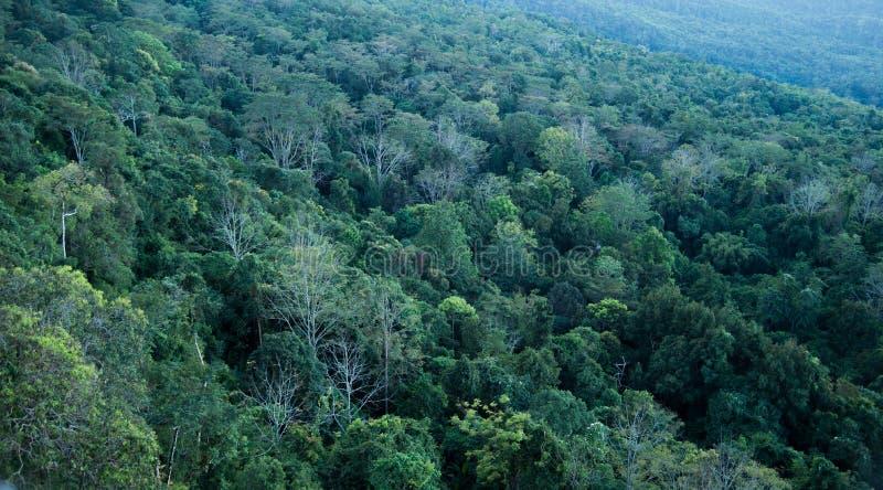 Natureza das árvores de floresta imagem de stock royalty free
