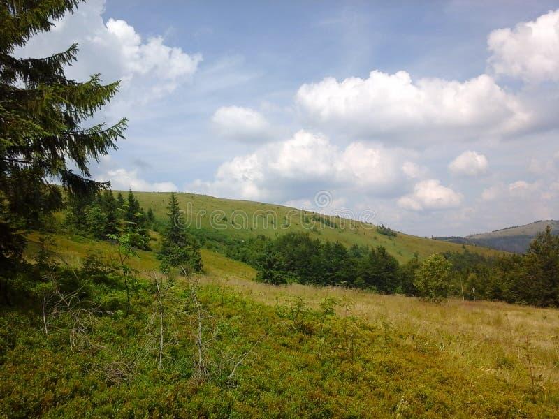 Natureza de Carpathians imagens de stock royalty free