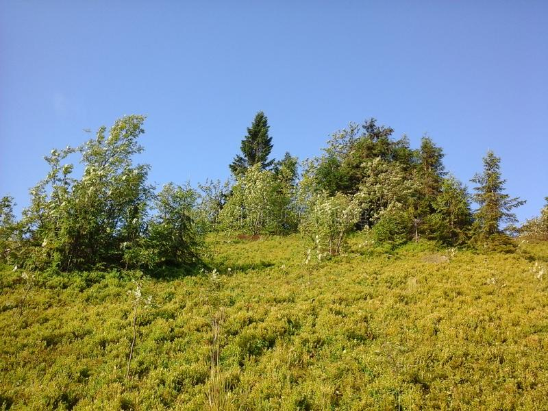 Natureza de Carpathians foto de stock