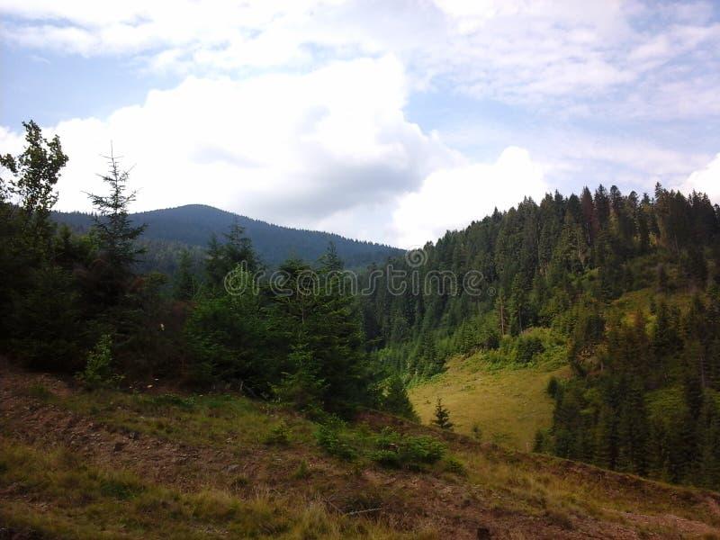 Natureza de Carpathians fotos de stock royalty free