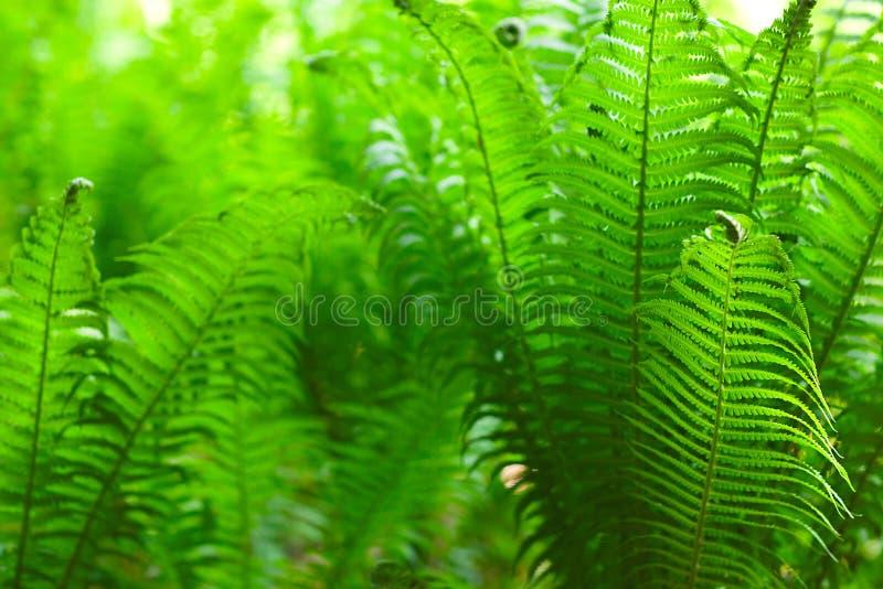 Natureza de Eco/fundo verde do sumário defocused ver?o da mola fotos de stock royalty free