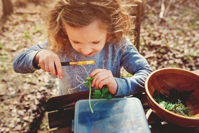 Natureza de exploração da menina da criança na mola adiantada, olhando primeiros brotos com lupa imagens de stock