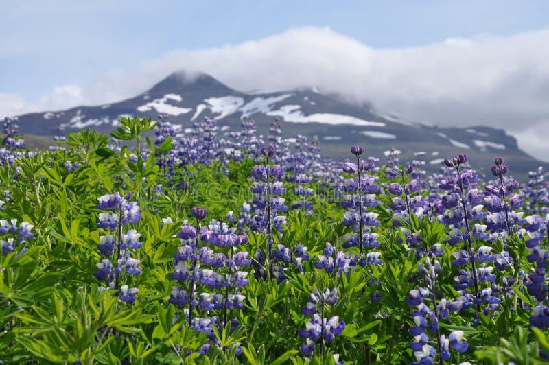 Natureza de Islândia fotos de stock royalty free