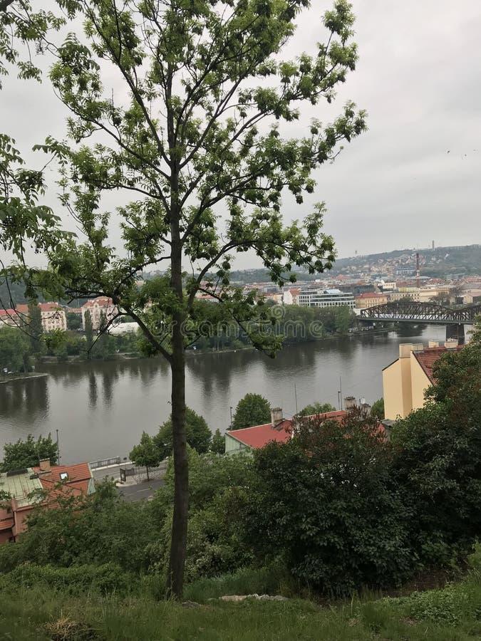 Natureza de Praga no verão, nas árvores e nas casas do beira-rio foto de stock royalty free