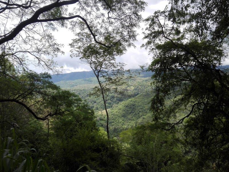 Natureza de Sri Lanka fotos de stock royalty free