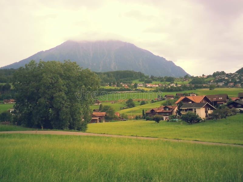 Natureza 2013 2014 de Suíça fotos de stock royalty free