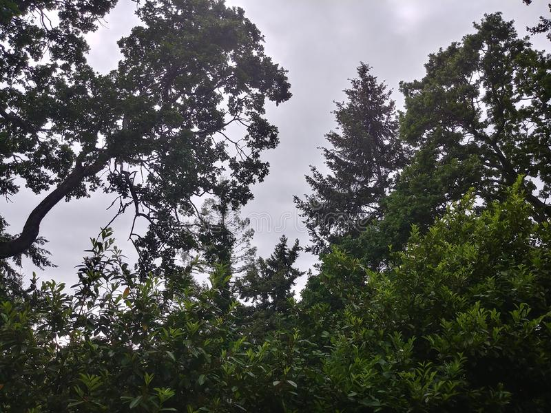 Natureza de Tacoma fotos de stock