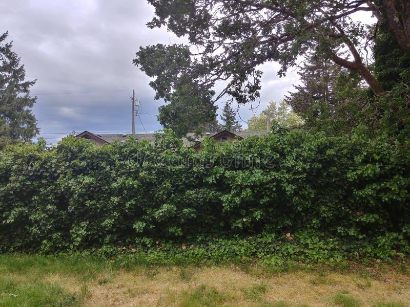 Natureza de Tacoma foto de stock
