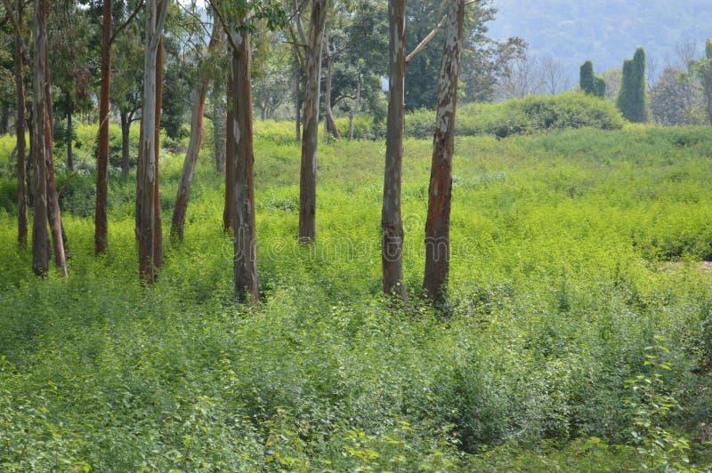 Natureza densa em uma floresta imagens de stock royalty free