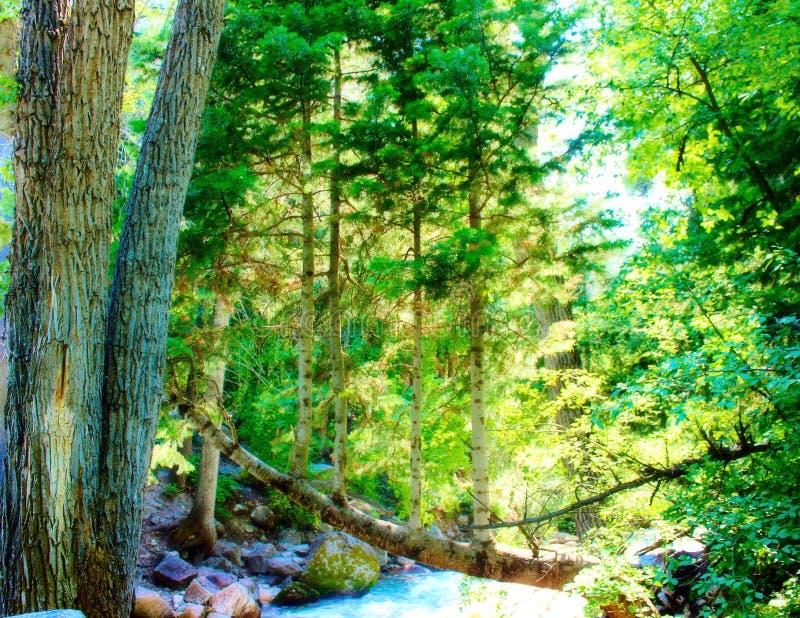 Natureza desatada fotos de stock royalty free