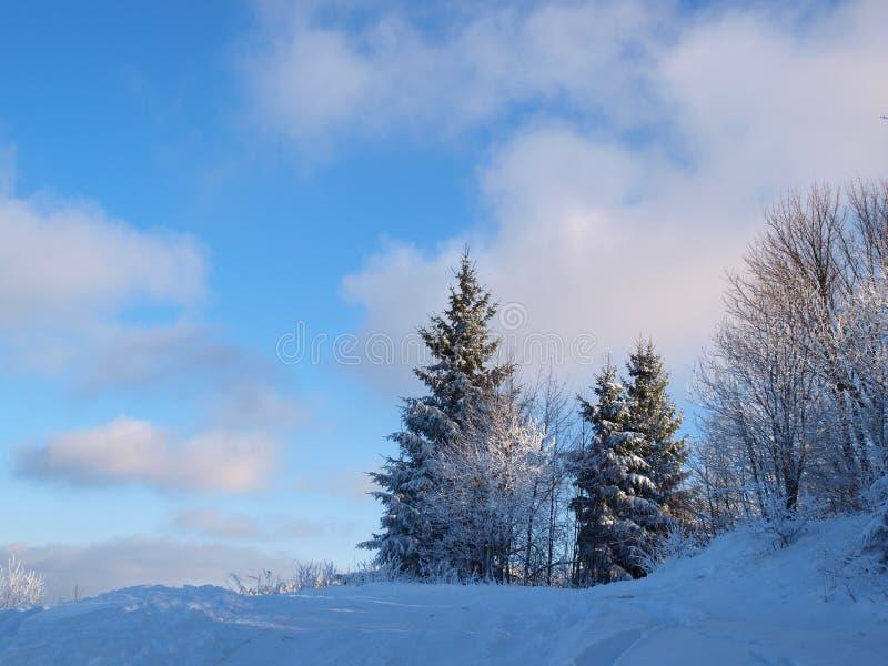 Natureza do inverno fotografia de stock royalty free