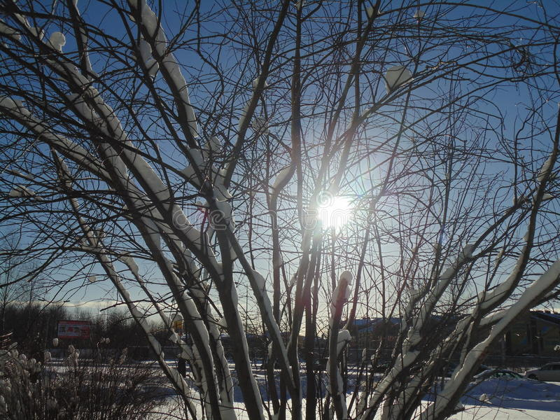 Natureza do inverno foto de stock royalty free