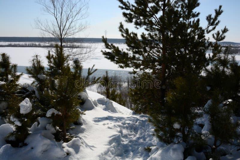 Natureza do inverno de Sibéria foto de stock