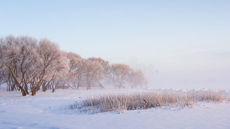 Natureza do inverno Fundo do Natal Paisagem do Xmas Árvores gelados e nevados Manhã clara do inverno neve inverno calmo wonderlan fotos de stock royalty free