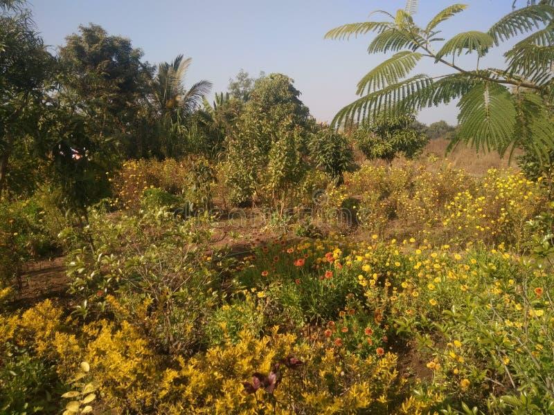 Natureza do jardim imagem de stock royalty free