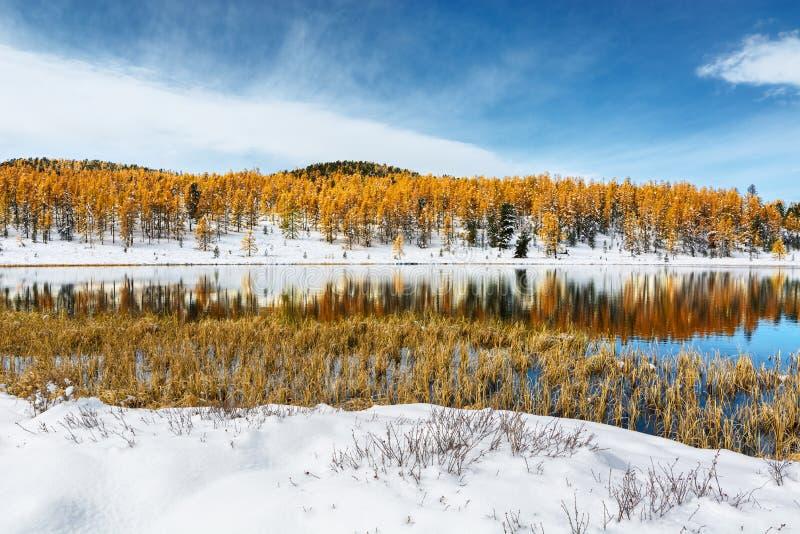 Natureza do outono com as árvores coloridas refletidas no lago da montanha fotos de stock