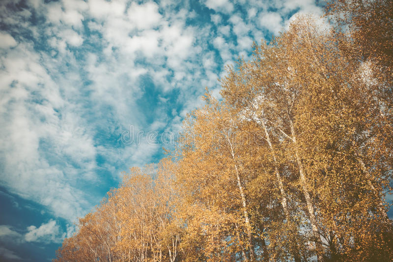 Natureza do outono com céu bonito fotografia de stock royalty free