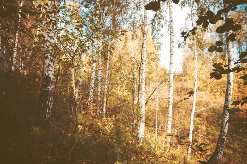 Natureza do outono na floresta imagens de stock royalty free