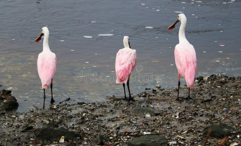 Natureza do parque estadual do Huntington Beach foto de stock