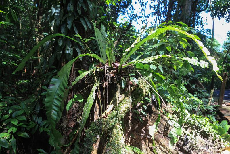 Natureza do parque nacional de Gunung Mulu de Sarawak, Malásia foto de stock