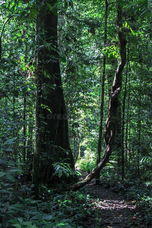 Natureza do parque nacional de Gunung Mulu de Sarawak, Malásia imagem de stock