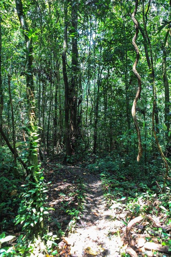 Natureza do parque nacional de Gunung Mulu de Sarawak, Malásia fotografia de stock