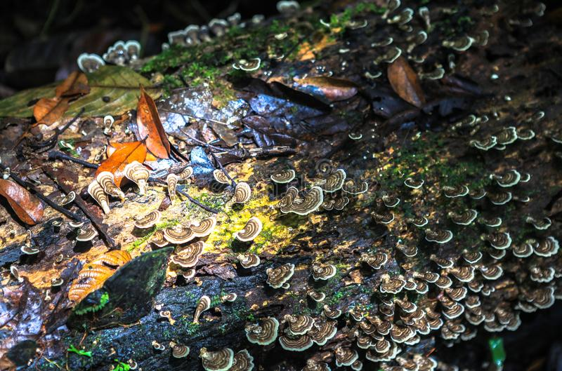 Natureza do parque nacional de Gunung Mulu de Sarawak, Malásia imagens de stock royalty free