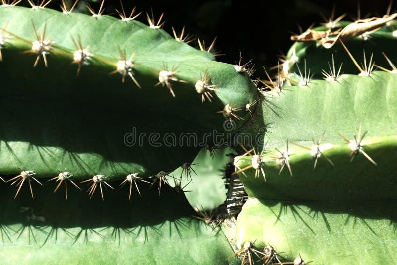 Natureza do sumário do close up do cacto foto de stock