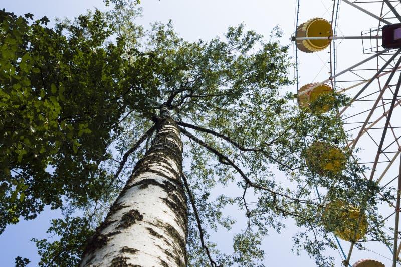 Natureza do verão do parque da roda de Ferris fotos de stock