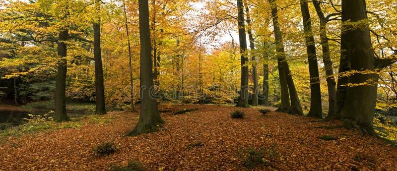 Natureza dourada imagens de stock