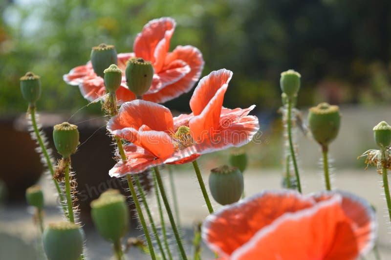 Natureza e beleza imagens de stock