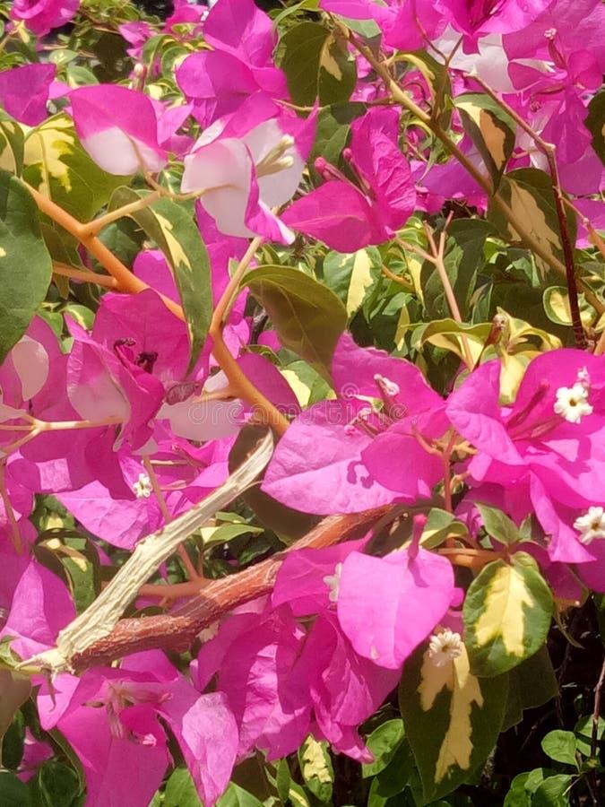 Natureza e folha e planta bonitas exige-se saúde da vida humana e dos povos fotos de stock royalty free
