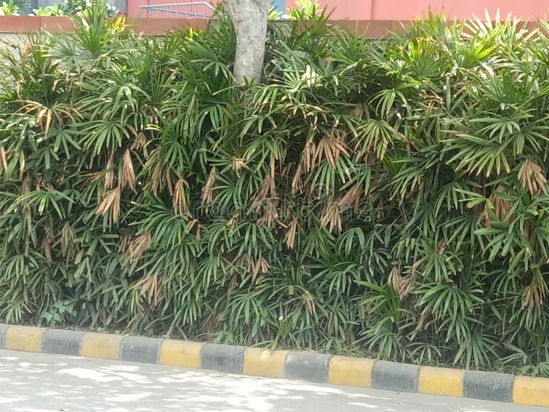 Natureza e folha e planta bonitas exige-se saúde da vida humana e dos povos fotografia de stock