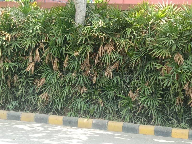 Natureza e folha e planta bonitas exige-se saúde da vida humana e dos povos imagem de stock royalty free