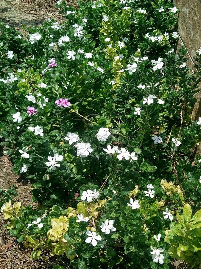 Natureza e folha e planta bonitas exige-se saúde da vida humana e dos povos imagens de stock