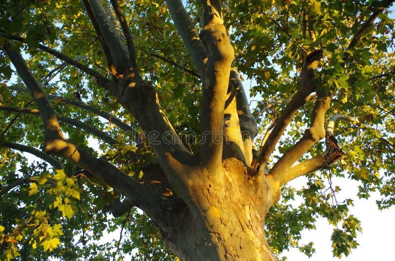 Natureza e pormenores Parte de uma árvore foto de stock