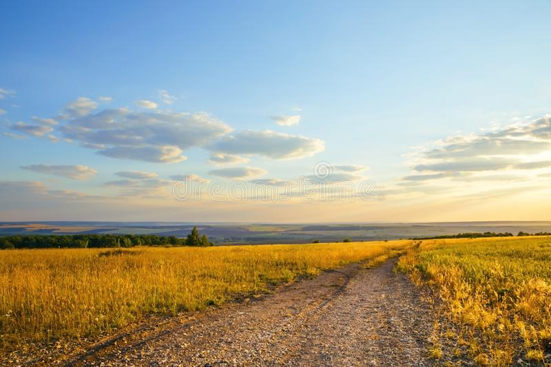 Natureza e turismo em Rússia na região de Saratov Paisagem com um prado da cor amarela dourada na perspectiva do fotografia de stock