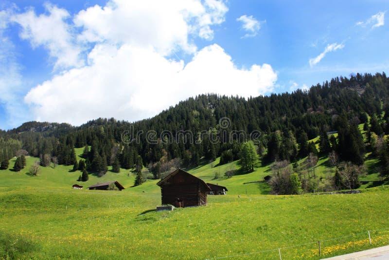 Natureza em Switzerland imagens de stock