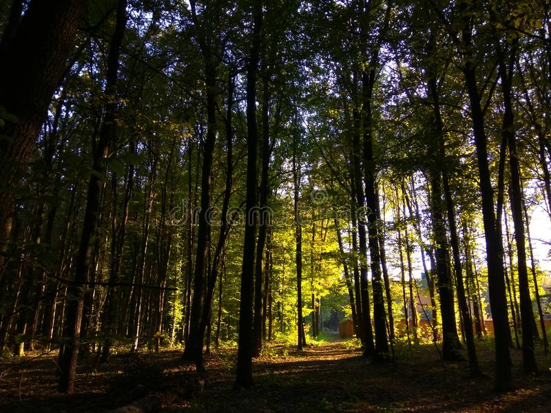 Natureza em Ucrânia foto de stock