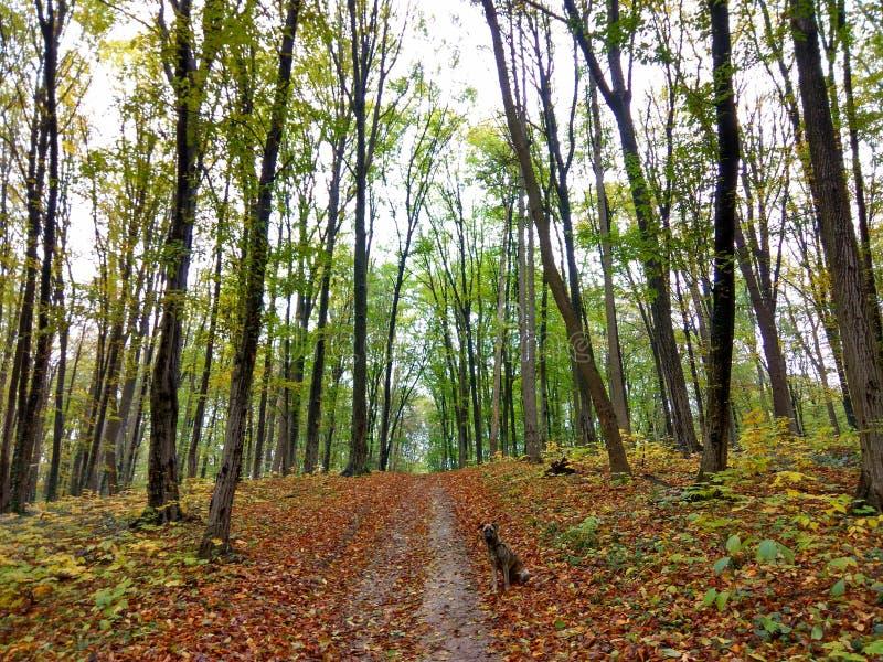 Natureza em Ucrânia fotografia de stock