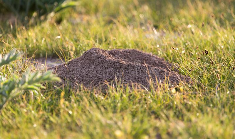 Natureza escavada da toupeira do solo foto de stock royalty free