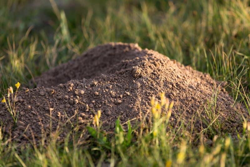 Natureza escavada da toupeira do solo imagem de stock