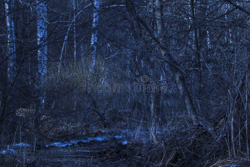 Natureza fantástica da floresta da noite com as várias árvores misteriosas foto de stock