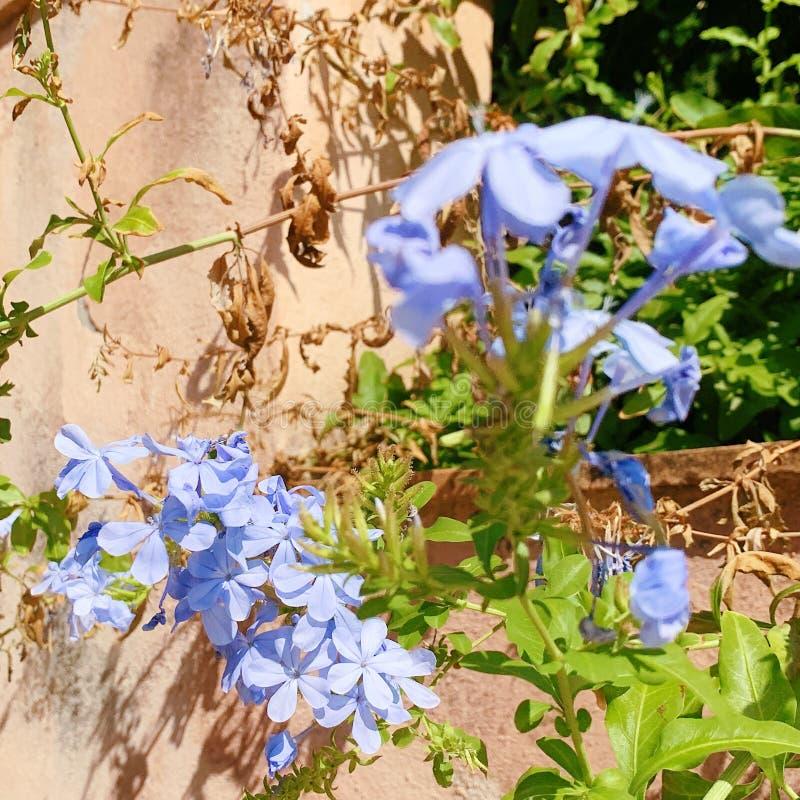Natureza & flores imagem de stock royalty free