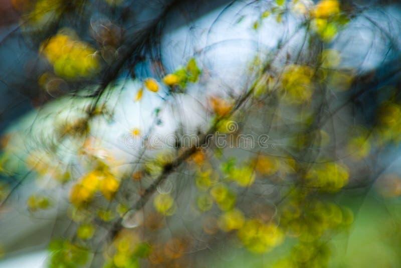 A natureza iluminou 3 fotografia de stock