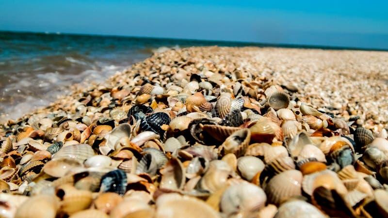 Natureza marinha na costa do Mar Negro em Rússia fotos de stock royalty free