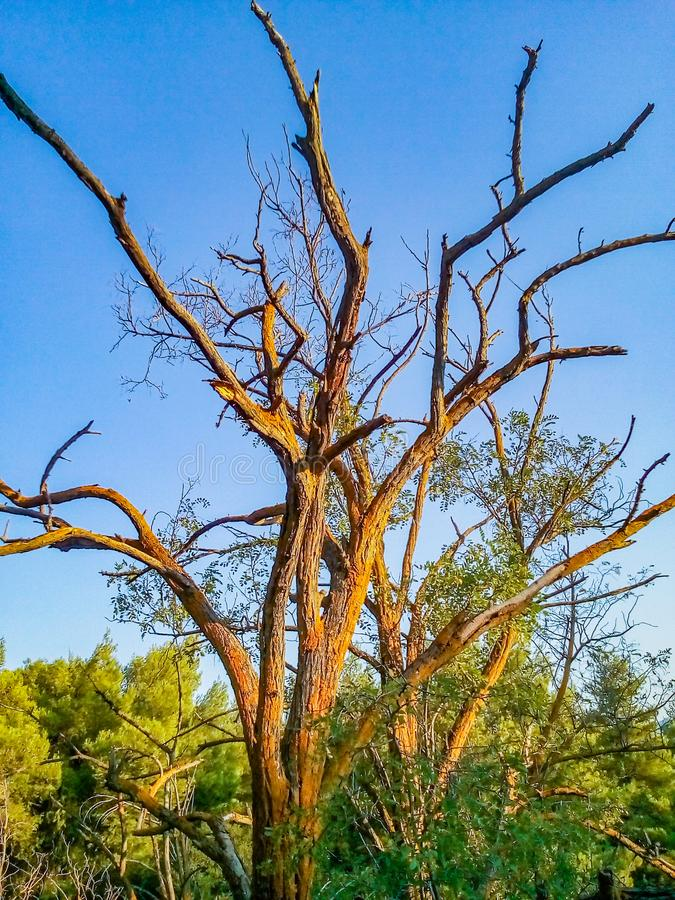 A natureza mesmo se está inoperante, é ainda bonita foto de stock royalty free