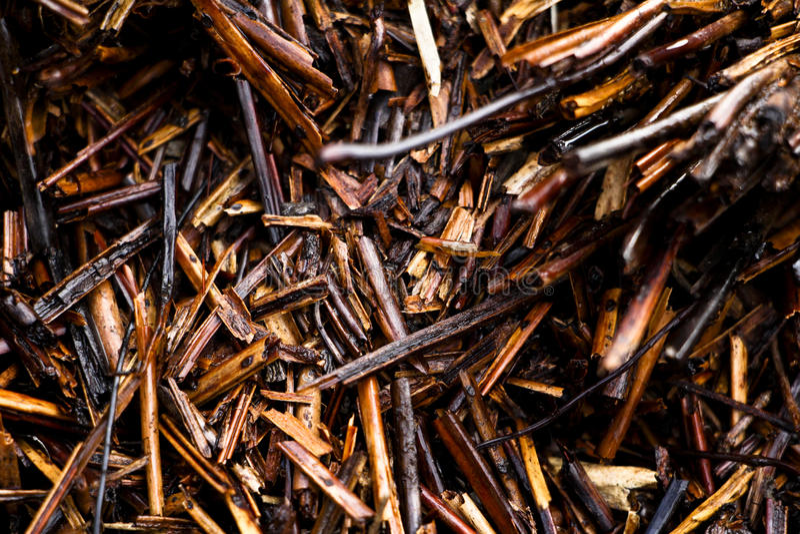 Natureza molhada de Brown imagens de stock