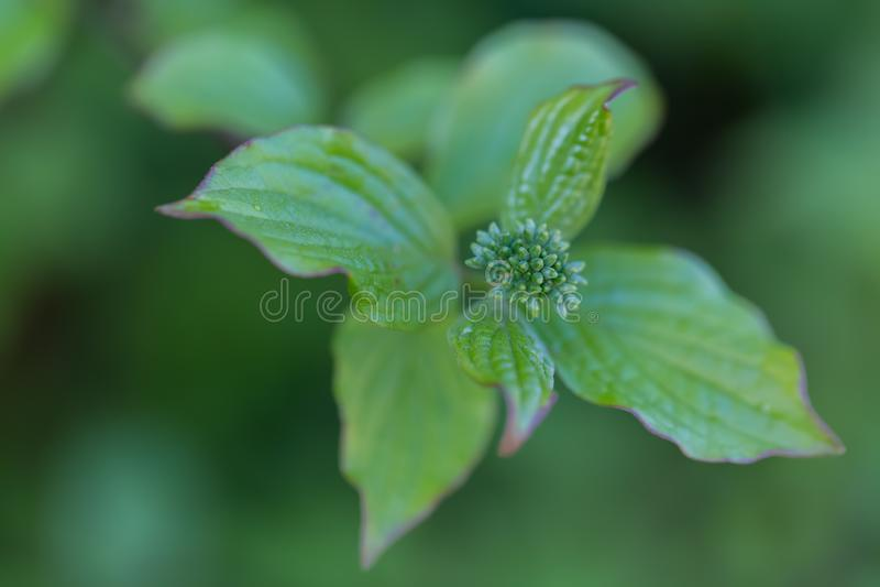 Natureza na primavera com folhas e os bot?es novos em uma floresta imagens de stock