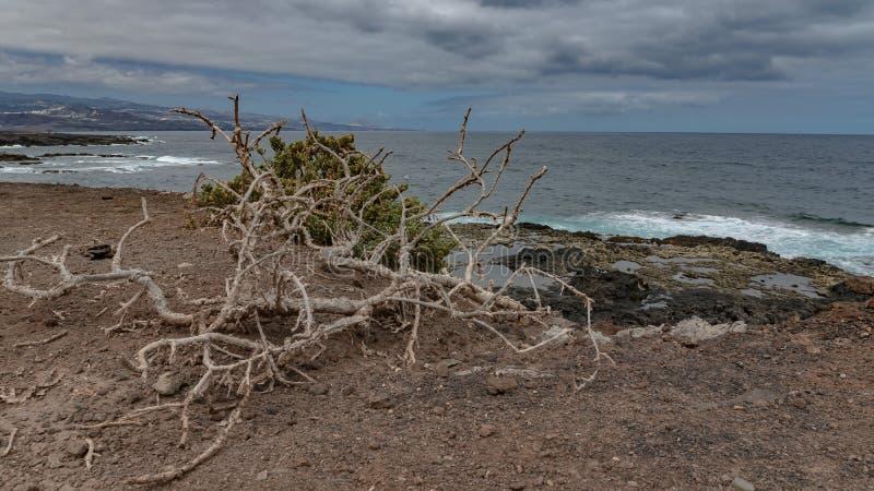 Natureza na zona Isleta de Gran Canaria fotos de stock